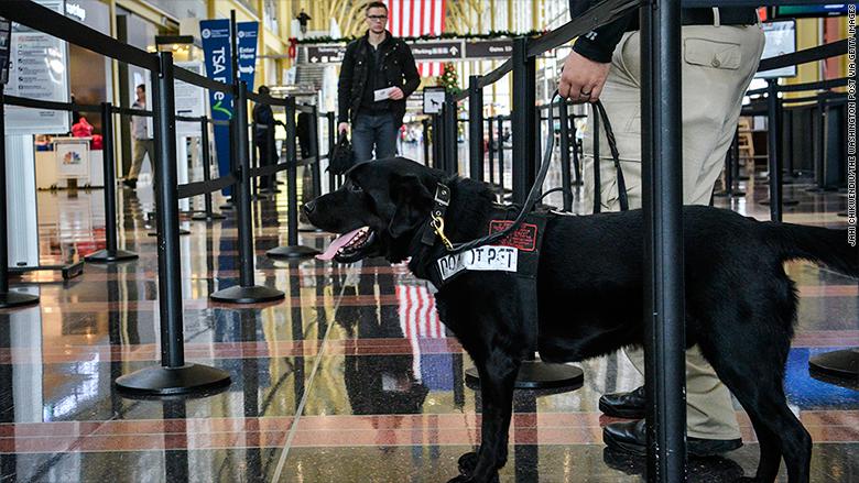TSA canine unit