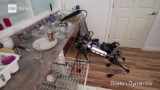 Watch this robotic dog do the dishes