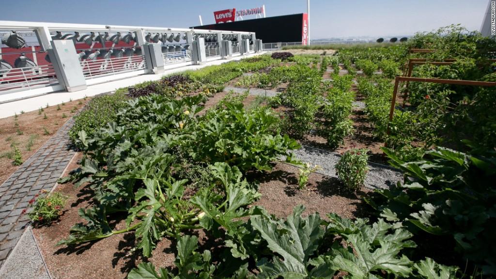 Levi's Stadium debuts a rooftop farm