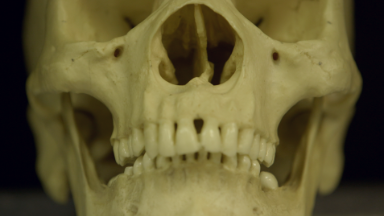 Solving cold cases by 3D printing skulls