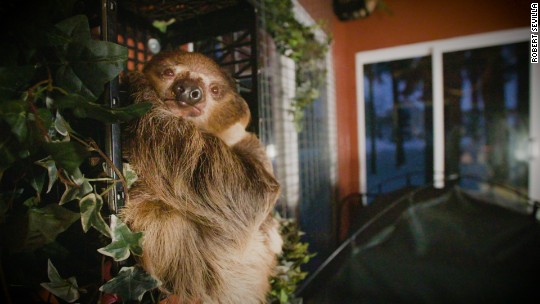 A sloth's guide to business travel