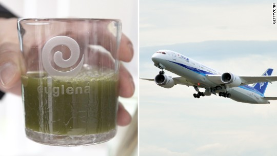 Algae could fuel the flights of the future