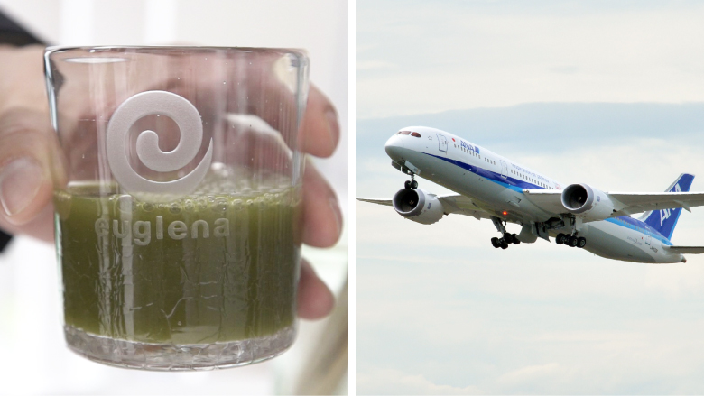 "oozing biofuel algae could solve worlds The oil giant exxon mobil, whose chief executive once mocked alternative energy by referring to ethanol as ""moonshine,"" is about to venture into biofuels on tuesday, exxon plans to announce an investment of $600 million in producing liquid transportation fuels from algae — organisms in water."