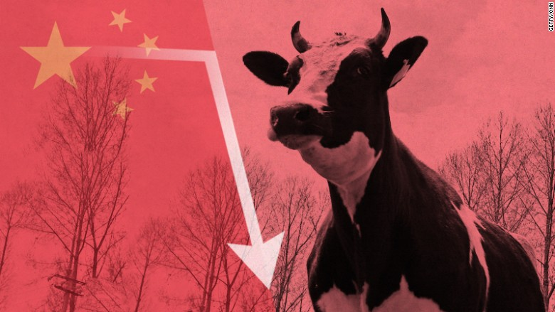 china dairy stock fall