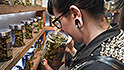 10 things to know about legal pot