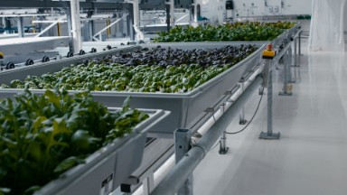 This high-tech farm grows veggies in a warehouse