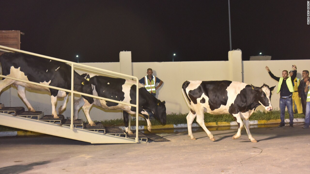 Watch Qatar fly in cows to ease milk shortage