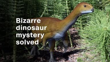 Bizarre dinosaur mystery solved