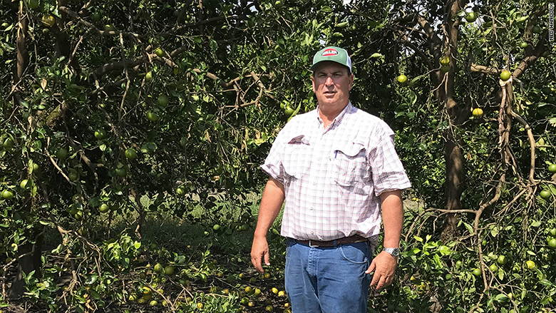 Putnam Surveys Citrus Groves Damaged By Hurricane Irma