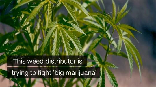 weed distributor