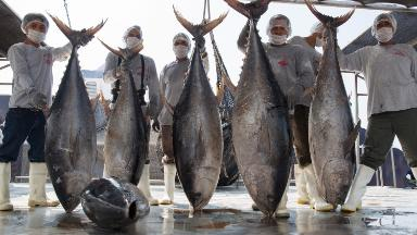 Mexico loses tuna trade battle to Trump administration