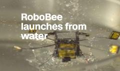 Robotic bee can jump off the surface of water