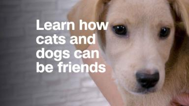 How your cat and dog can be friends