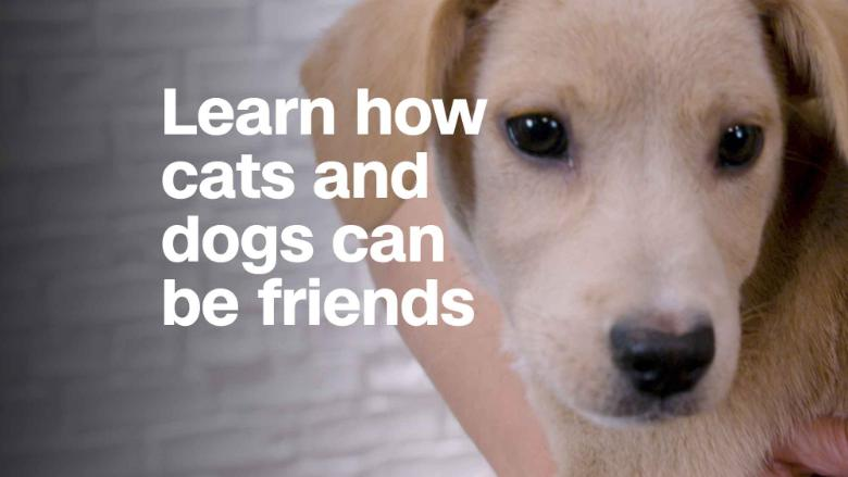 Site Animalplanet Com Cat Vs Dog Show