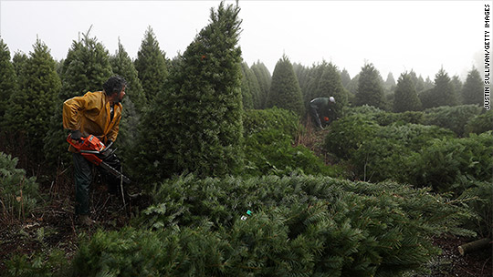 Why it's harder to find a Christmas tree this year