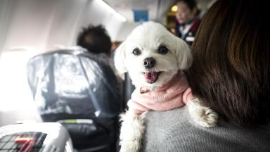 Delta flies 250,000 service animals a year. Now the rules are changing