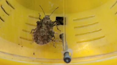 Stink bugs on ships disrupt Japan's car exports