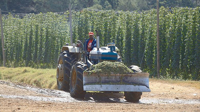 south african hops farm