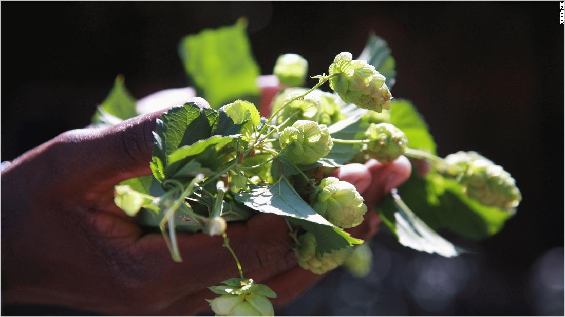 Turning hops into South Africa's 'next wine'