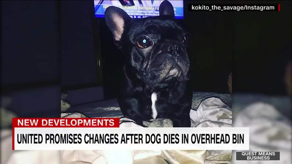 For dogs, United can be deadly