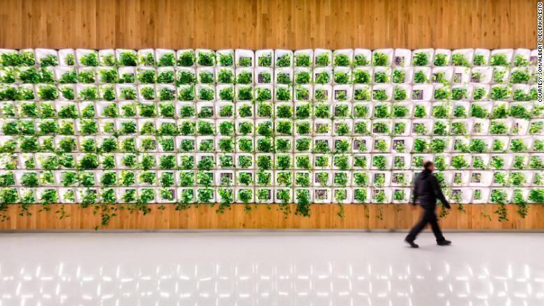 living wall som