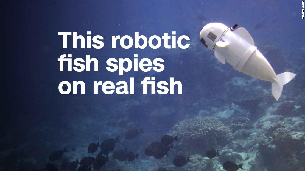 Watch this robotic fish flap its fins in Fiji's Rainbow Reef