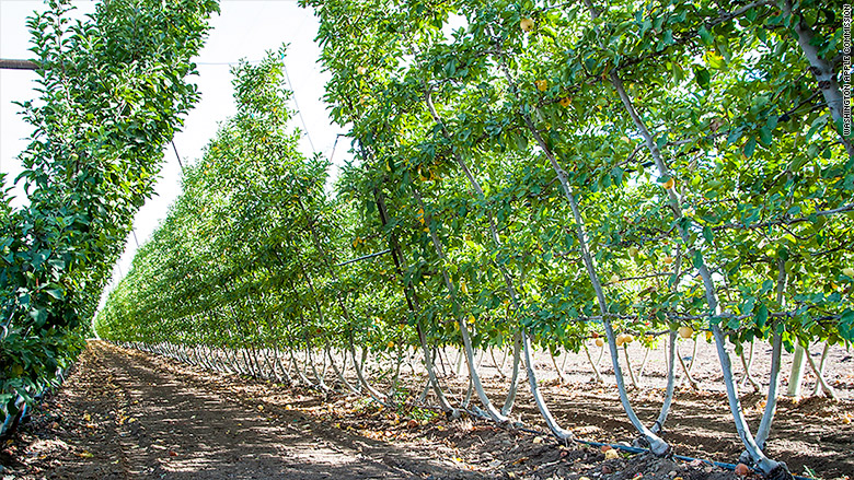 apple chinese tariffs 2