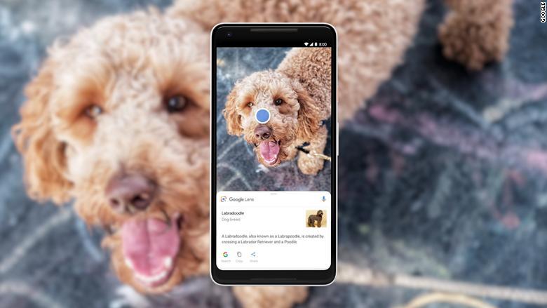 Google Lens dog