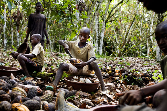 Children harvesting cocoa