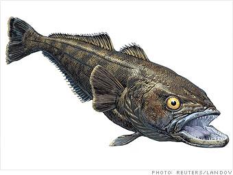 A rogue fish