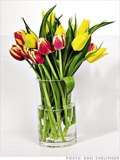 Tulips.com's Tulips