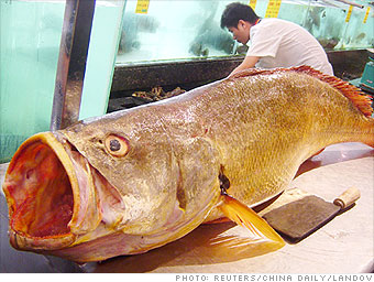 golden tiger fish