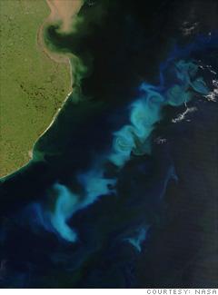 Ocean seeding