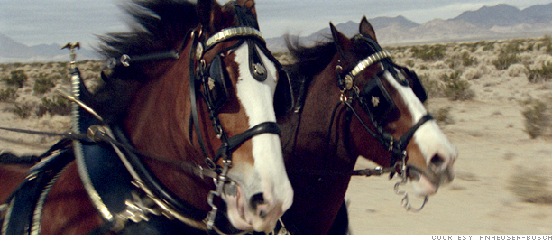Anheuser Clydesdales