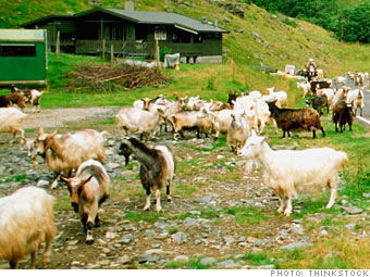 Become a goat herder