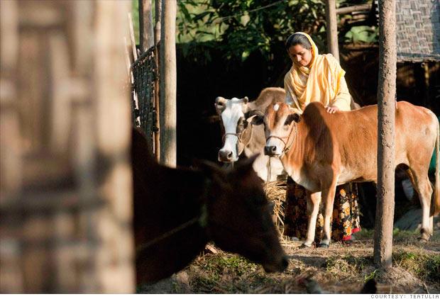 Cattle-lending program