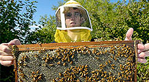 A Buzz About Honey