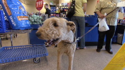 PetSmart outsmarts the recession