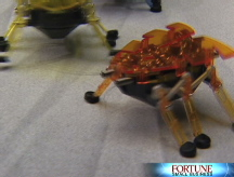 The robot bug - a hot new toy