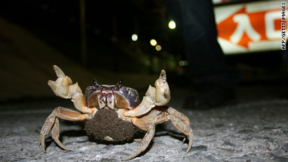 Image result for kenting land crab road crossing