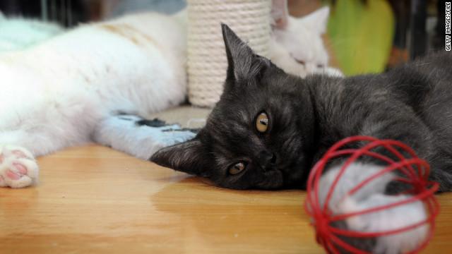 oler excremento de gato