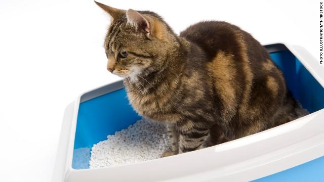 que es el parasito del gato en mujeres embarazadas