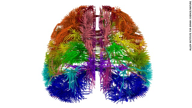 This is a 3-D view of connections in the brain originating from different cortical areas.