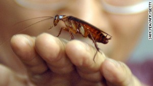 The cockroach is one of the hardiest creatures on the planet; it can live for a month without food.