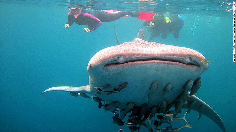"""In addition to offering diverse coral reefs, the Philippines is becoming increasingly popular as a top spot to<a href=""""http://www.cnn.com/2015/07/05/travel/whale-shark-oslob/""""> swim with whale sharks</a>."""