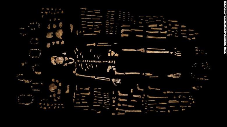 Un esqueleto compuesto de H. Naledi está rodeado de algunos de los cientos de otros elementos fósiles recuperados de la Cámara Dinaledi en el aumento de la cueva de la estrella en Sudáfrica.