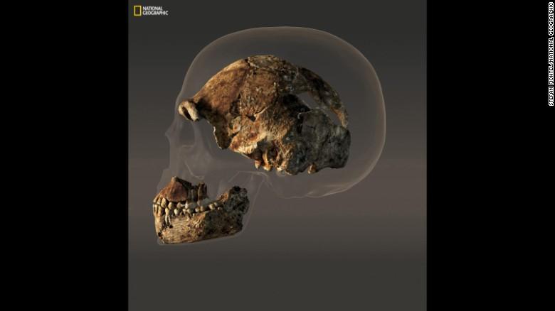 La caja craneana de un cráneo masculino compuesto de medidas Naledi Homo sólo 560 centímetros cúbicos de volumen - menos de la mitad del cráneo humano moderno lo representado detrás de él.