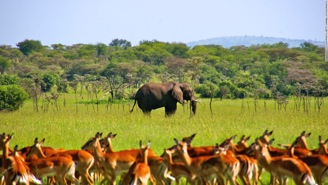 Africa's largest wildlife reserve, the 48,000 square kilometer Selous Game Reserve, is home to a cornucopia of Tanzania's indigenous wildlife. Visit the country's largest protected area to see lion, leopards, elephants, buffalo, and black rhino among other wild and wonderful creatures.