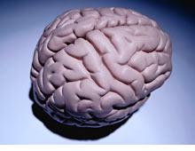 brain.ce.03.jpg