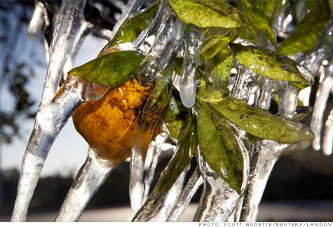 frozen_oranges.la.top.jpg
